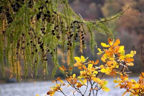 autumn colours Scotland