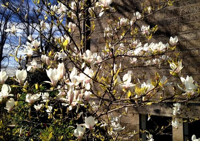 whitetree
