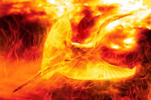 flaming bird photomanipulation by nisha gandhi