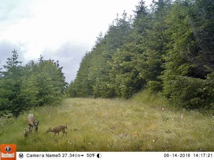 Deer at Mount Rainier Gateway Protected Area