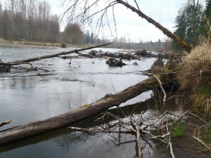The shoreline has a fair amount of large woody debris at this stretch of the river.