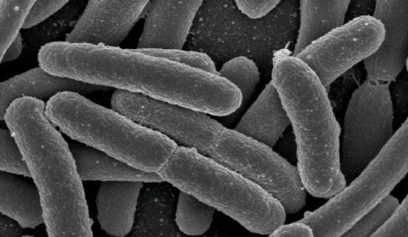 The Future of Medicine: The Gut Microbiome