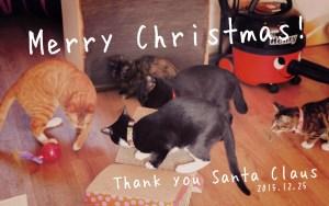 facebookクリスマス猫-05