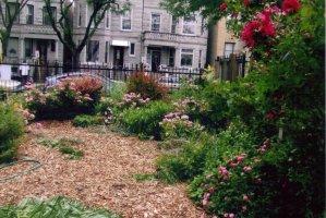 Crystal's Peace Garden.