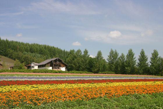 こちらも8月のファーム富田。「秋の彩りの畑」