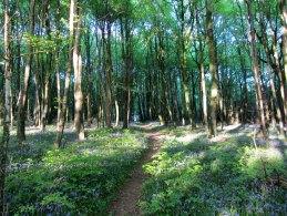 Capponellan Wood, Durrow, Co. Laois.
