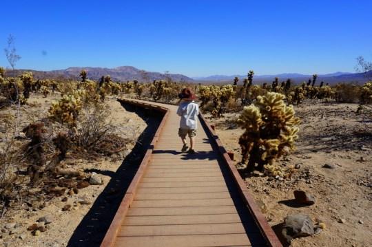 Cholla Cactus Garden - Family friendly hikes at Joshua Tree