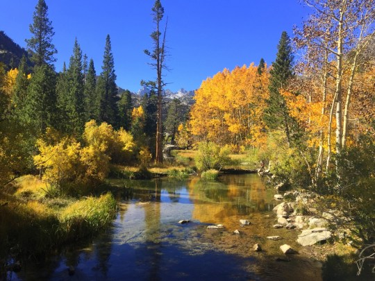 Finding Fall in Bishop, California