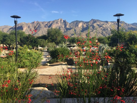 Where to Stay in Tucson (with Kids) - Westin La Paloma