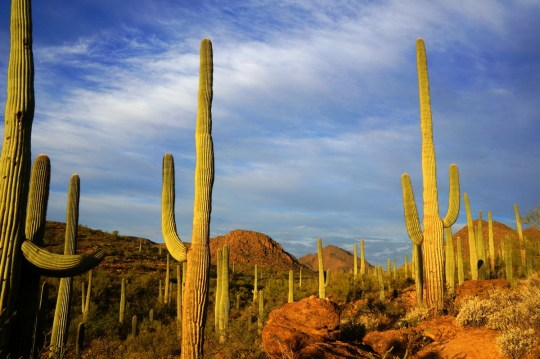 Where to stay in Tucson with kids