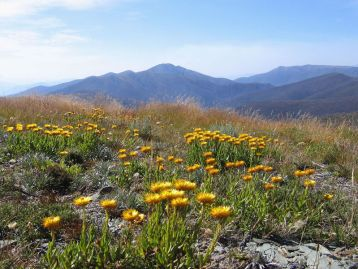 On Mt Hotham looking to Mt Feathertop, Victoria (Photo: John O'Neill. Source: Wikipedia).