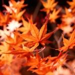 諏訪峡の紅葉2014!みなかみ町で秋を楽しむ秘訣は?
