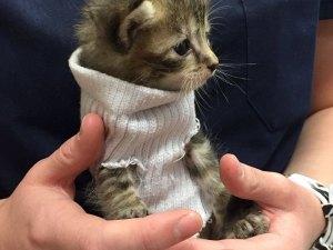 kitten-tube-sock-sweater-hurricane-matthew-1