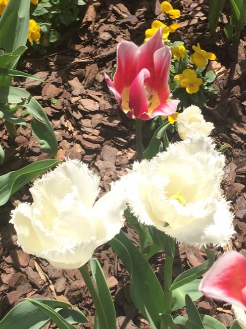 ntb-tulip-inspired-lotd-dark-skin1915 copy