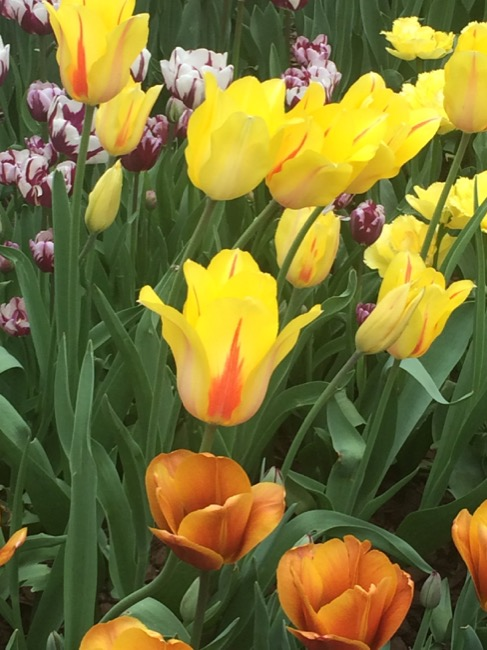 ntb-tulip-inspired-lotd-dark-skin1988 copy