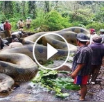 Video: World Biggest Anaconda Snake Found In America's Amazon River