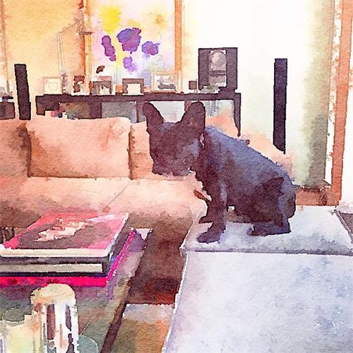 French Bulldog in Modern Room Setting via Hunt Beauchamp Instagram