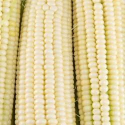 Small Of Silver Queen Corn