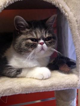 cat-1599158_1280