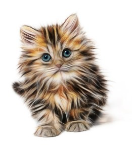 kitten-1582384_1280