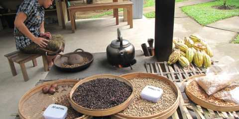 Coffe Plantation - Gianyar