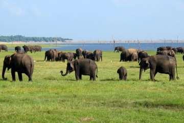 Kaudulla National Park 2