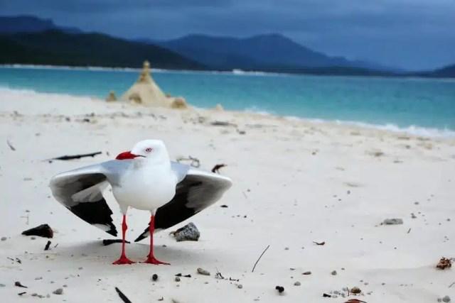 Foto scattata a Withsunday Australia