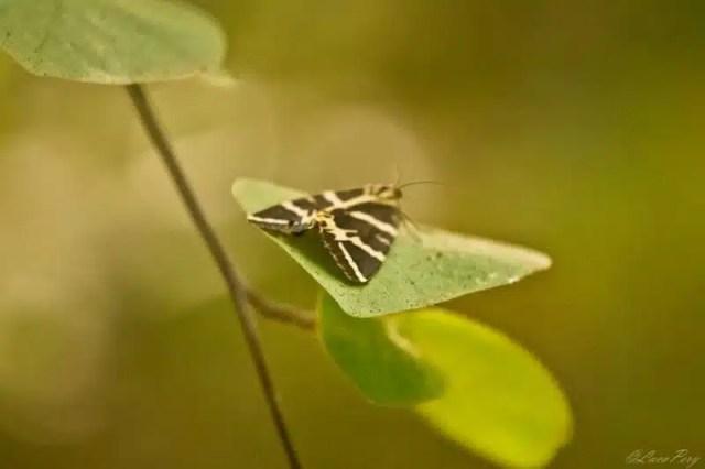 Valle delle Farfalle - Rodi, Grecia