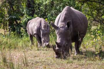 Ziwa Rhino Sanctuary_Uganda_Jurriaan Persyn