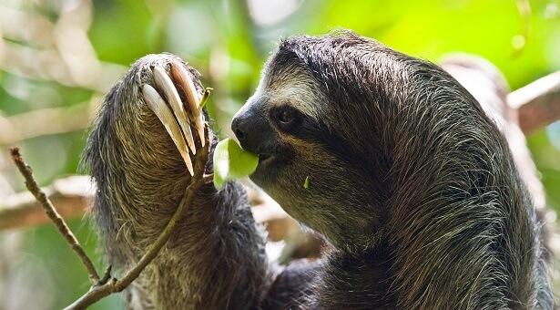 Costa-Rica lieux d'intérêt