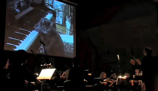 Klaipeda Chamber Orchestra performs CATcerto by Midaugas Piecaitis