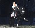 Stars der Pferde