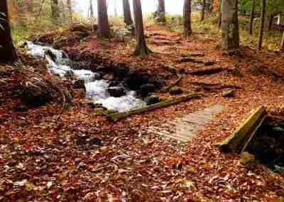 梓水神社 晩秋の参道は落ち葉の絨毯