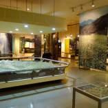 自然保護センター 展示