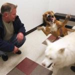 Scott_Garrison_dogs_saved_from_icy_river
