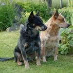 acd red & blue