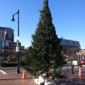 Cross Street Christmas Tree Arrival - November 2012 - Photo by @Boston_to_a_T