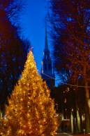Christmas Tree on Prado with Old North Spire - Dec 2012