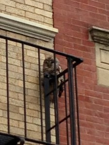 Owl on Prince Street (Photo by Ryan Kenny)
