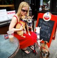 Woman with Four Dogs Outside Caffe Dello Sport - May 2013 - Photo by Matt Conti