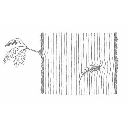 Medium Crop Of The Tree Center