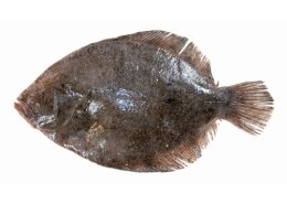 turbot-feature-img