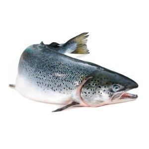 wild-salmon-rs