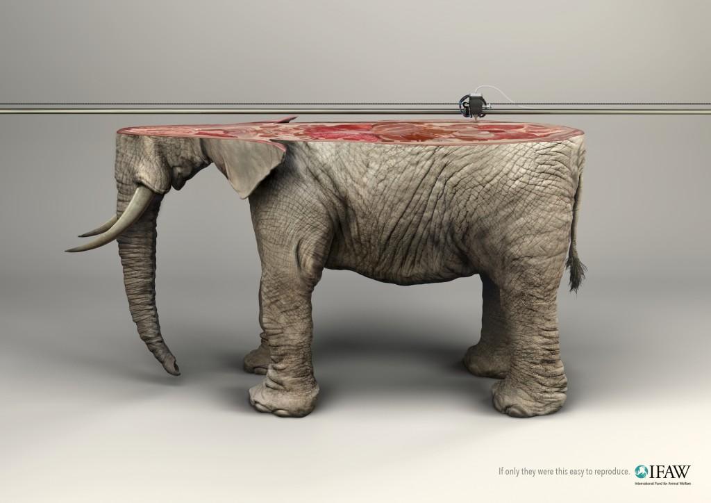 IFAW NGO - 3D Printer Elephant