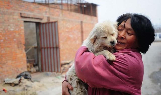 mujer-salva-100-perros-yulin-6
