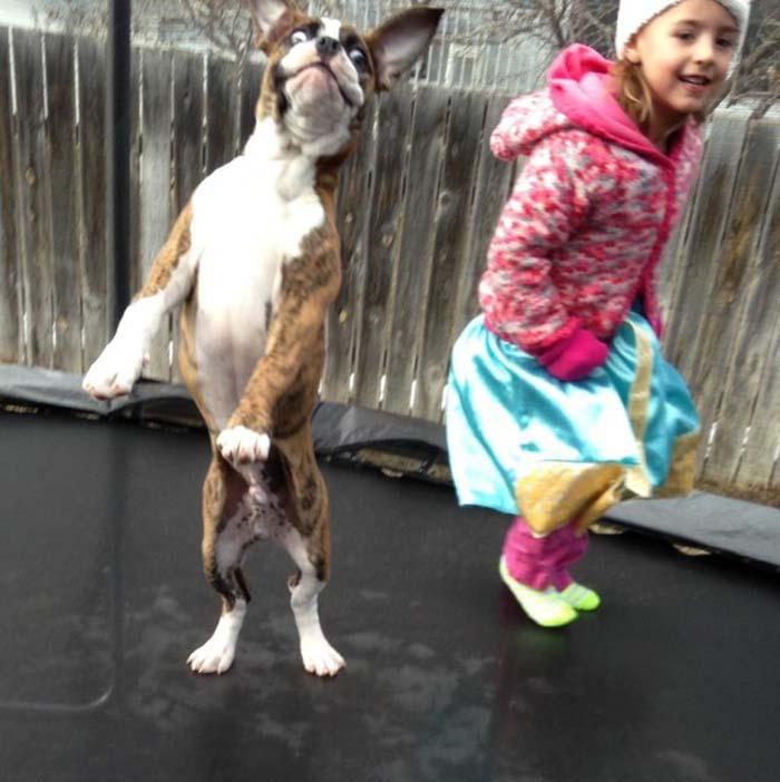 perros-parte-de-la-familia-4