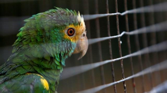Aves y otros animales duraron semanas sin comer en zoológico