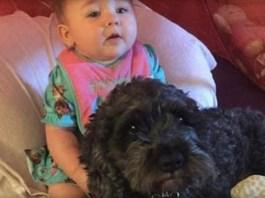 Perro dio su vida para proteger a una bebé