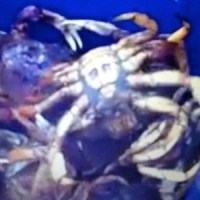 Família pega caranguejo com imagem imagem do rosto de Jesus Cristo gravada no corpo
