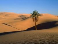 Fiel tenta reproduzir jejum de Jesus no deserto e é encontrado morto após 30 dias